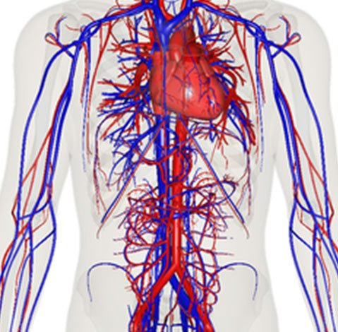 Peripheral neuropathy How Are Oxygen and Nutrients Transmitted throughout the body?